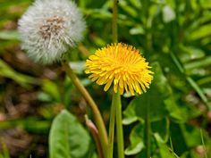 Deal with cool-season weeds in the lawn and garden areas. Spot spray young dandelions that sprout from summer seeds. —Julie Martens