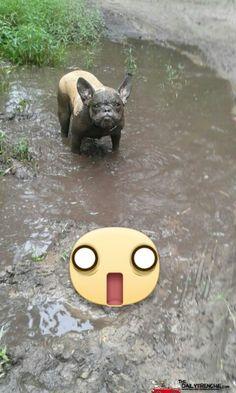 Unser Schweinehund Siri