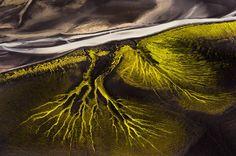 Giftgrünes Blut: Wie ein feines Kapillarnetz wirken diese Strukturen in einem...