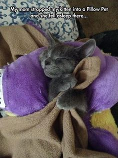 www.myhappykitty.net FUNNY ANIMAL PICTURES OF THE DAY – 23 PICShttp://pinterest.com/pin/193725221450342069/