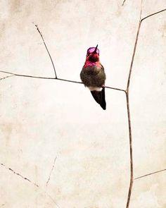 Hummingbird Wall Art. Reminds me of grandmother. :)