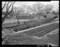 """February, 1936 """"El Monte federal subsistence homesteads. Seventeen dollars and seventy cents rent to apply on purchase of three-room house."""" (Photo by Dorothea Lange, courtesy of the Library of Congress)"""