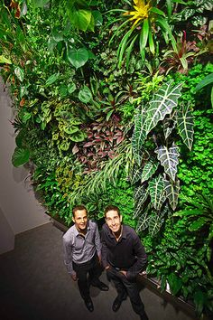 Jardín Vertical Green Wall