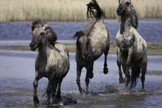 18 Breathtaking Photos Of Wild Horses Around The Globe