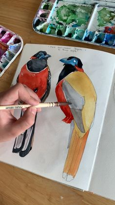 Using Polina Bright synthetic watercolour brush (cruelty free) acuarela Male red-napped Trogon by Polina Bright Watercolor Video, Watercolor Brushes, Watercolour Tutorials, Watercolor Artwork, Watercolor Bird, Art Sketches, Art Drawings, Art Du Croquis, Arte Sketchbook