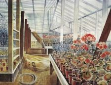 Geraniums And Carnations In Greenhouse - Eric Ravillious
