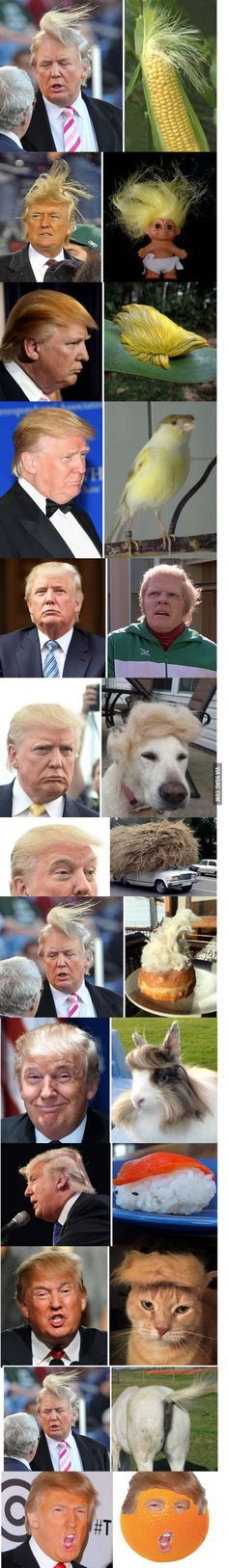 15 Things That Just Look Like Donald Trump, Who Wore It Better? Poor Donald, but so funny Funny Quotes, Funny Memes, Hilarious, Donald Trump Funny, Donald Trump Hair, Just For Laughs, Funny Posts, Laugh Out Loud, Best Funny Pictures
