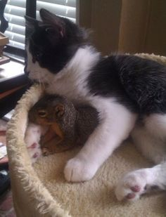 """""""this little squirrel keeps coming in through the doggy door to hang out with my cat."""""""