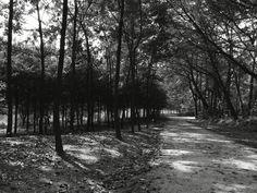 산책하는 길, 교하 숲길