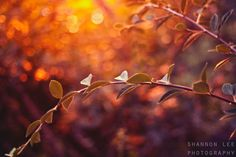 Fine art photography nature photography fall by ShannonLeePhoto, $30.00