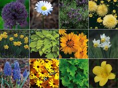 Flower choices for the front yard! | Rhody Life