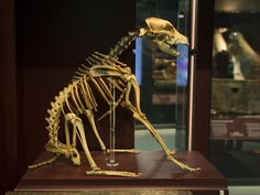She was a scrappy sea mongrel who went down with her ship. Now nearly 500 years after Hatch the crossbreed drowned with the crew of the Mary Rose, it has emerged that the world's most famous sea dog, and the only known female aboard, was male.