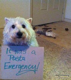 Morgie-Pasta-Emergency