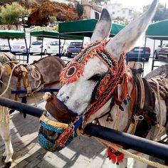 Ja oczywiście cały czas zwiedzam Maroko, ale w międzyczasie na bloga wrzuciłam kolejny cudowny wpis z Andaluzji 💦 Tym razem zabieram Wam do Mijas - jednej z najpiękniejszych ( a może najpiękniejszej!) białej wioski 💦 Co mi się w niej tak podobało? Co ma wspólnego z tak bliską mi kulturą arabską? Czy jest to idealne miejsce na urlop? Poczytajcie na blogu! Zapraszam! 💦 . #mijas #mijaspueblo #mijaspueblo #osioł #osiołek #andalucia #andaluciaviva #andalucia_photos #andaluciaparaiso…