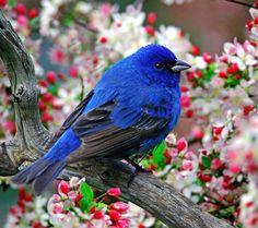 .@RR120_80  natürliche Schönheit für uns! :}