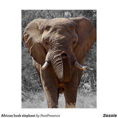 Elephant Poster, Elephant Quilt, Wild Elephant, Elephant Love, Elephant Ears, Elephants Photos, Baby Elephants, Giraffes, Zebras