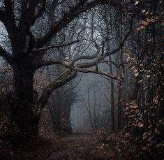 Dark Fairytale, Brown Aesthetic, Dark Forest, Character Aesthetic, Fantasy World, Aesthetic Wallpapers, Fairy Tales, Scenery, 1