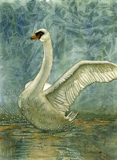 .swan