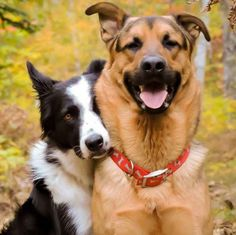 Because of the existence of Lottie, the border collie, and Grizzly, the German shepherd: best friends from Sudbury, Ontario.