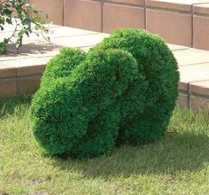 rabbit topiary | ... rabbit nails. At least there isn't any stomping when the trimming is