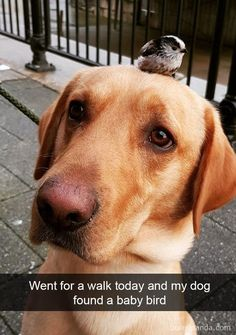 Funny dog memes of the day. If you're having a rough day, check these top 38 funny dog memes pictures that will cure your bad day. Share these dog pictures if you like them. Funny Animal Quotes, Animal Jokes, Funny Animal Pictures, Animal Antics, Cute Little Animals, Cute Funny Animals, Funny Cute, So Cute, Humorous Animals