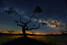 From this carefully chosen perspective in Salamanca, Spain, photographer César Vega Toledano lines branches of a tree to be continuous with dust lanes in our Milky Way galaxy.