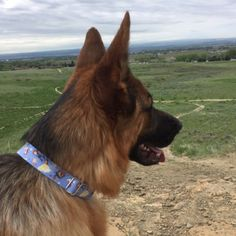 """aemcpherson: """"I love the Beauty and the Beast collar! It fits perfectly and is well made! This is the second collar I have bought and plan on buying more in the future. Would highly recommend! 😀"""""""