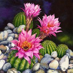 Cactus Flower Painting - Desert Garden, Pink by Debbie Bakker Cactus Drawing, Cactus Painting, Watercolor Cactus, Cactus Art, Cactus Flower, Flower Art, Watercolor Art, Cactus Plants, Art And Illustration