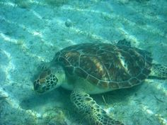 St. John Virgin Islands, I snorkled with the sea turtles and it was awesome!