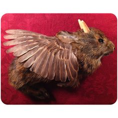Flying Young Winged Jackalope, or Wolpertinger, on Red Damask in Deep Wood Display by BoneLust on Etsy