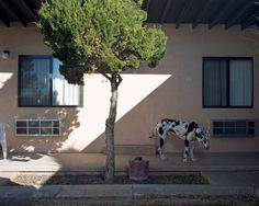 Motel scenes : Haakon Harriss Photography Motel, Giraffe, Photography, Animals, Felt Giraffe, Photograph, Animales, Animaux, Fotografie