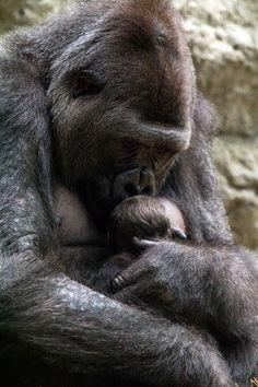Awesome Animal Photos Of 2013