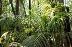 foliage  (123rf   2013)