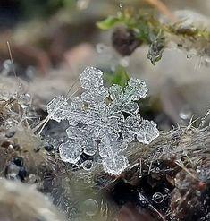 雪の結晶 画像21