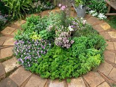 Herbs make an inspiring feature when grown together, and tend to like similar conditions. Soften an area of hardscaping by allowing space for a circle of these colorful, low-growing, culinary plants.
