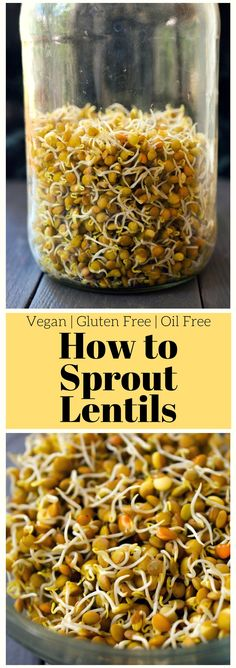 Sprouted lentils are tasty and great for sandwiches, salads, wraps and Buddha bowls. If you've ever wondered how to sprout lentils at home, let me tell you that it's easy and totally worth it. Cheaper than buying sprouts at the supermarket, home sprouted lentils are versatile and packed with flavour and nutrition!