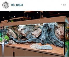 That moment when your aquascaping game is just too strong --> this would make an incredible terrarium! Gecko Terrarium, Terrarium Reptile, Aquarium Terrarium, Home Aquarium, Aquarium Fish, Reptile House, Reptile Habitat, Reptile Room, Reptile Cage