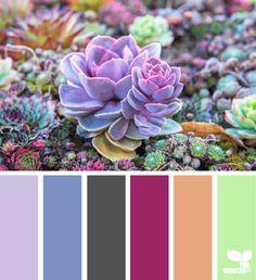 Succulents color board