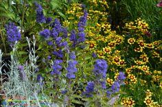 Niles Flowers 5