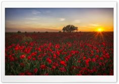 Beautiful Spring Landscapes Of The World HD Wide Wallpaper for Widescreen