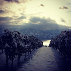 mission hill vineyard, first snowfall Vancouver, Vineyard, In This Moment, River, Random, Outdoor, Outdoors, Vine Yard, Vineyard Vines