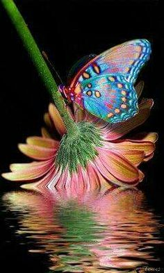 Beautiful reflections of flowers!!! Bebe'CTBelle!!! Just beautiful!!!