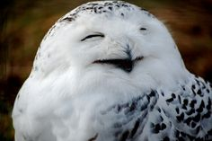 happy owl is happy (in a really creepy way)