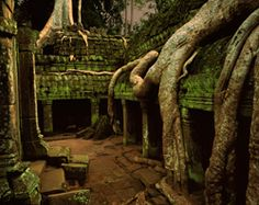 Ta Prohm, the most beautiful tree covered temple at Angkor Wat, just outside of Siem Reap, Cambodia.