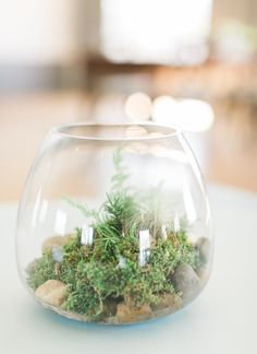 Garden terrarium cen