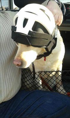 Dog ready for kiteboarding <3