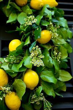 A terra nos deixa coisas a apreciar. Limões amarelos.
