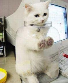pass me the jar of cat