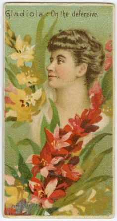 Gladiola - 'On the Defensive' in the Victorian Language of Flowers.