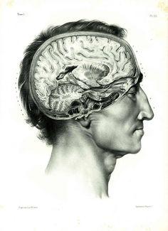 1844 XL Antique Brain Print Human Skull Brain Anatomy